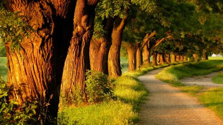 amusement-parks-relaxing-evening-walk-way-parks-grass-tree-trees-nature-footpaths-beautiful-alleys-footpath-alley-wallpaper-wide-1920x1080