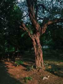 aged aging background bark